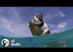 Enlace a El gato surfero