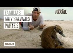 Enlace a Wild Frank encontrando familias de animales [PARTE 2]