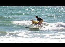 Enlace a El hombre que surfeaba junto a una cabra