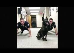 Enlace a Un perro policía se suma a las flexiones de sus compañeros