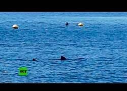 Enlace a Avistan un tiburón en la playa de Calahonda, Granada