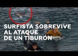 Enlace a Surfista golpea a un tiburón para escapar de él