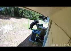 Enlace a Un oso se cuela en un jardín buscando comida
