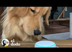 Enlace a Un perro descubre los sonidos de otros animales con Alexa