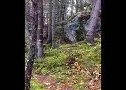 Enlace a Extraño movimiento en el suelo de un bosque