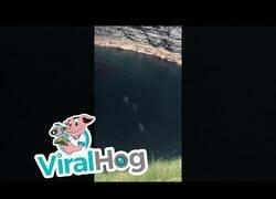 Enlace a Avistan 7 tiburones en una pequeña cala de Irlanda