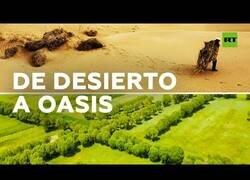 Enlace a Un desierto en China se convierte en un bosque