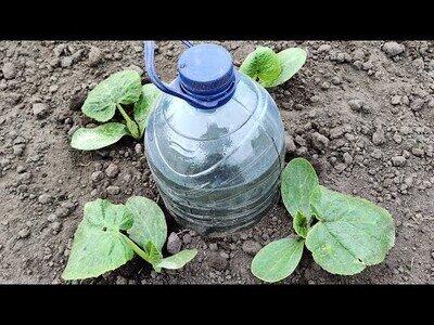 Cómo hacer un sistema de riego por goteo con una simple garrafa de agua