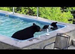 Enlace a Una familia de osos se baña en una piscina particular
