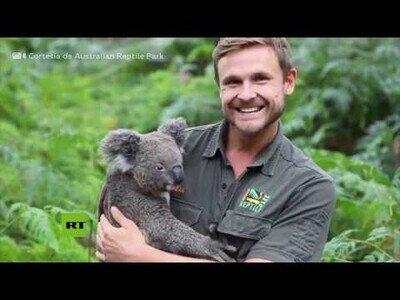 Nace el primer koala en un zoo australiano tras los incendios devastadores