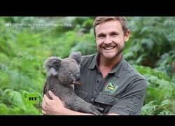 Enlace a Nace el primer koala en un zoo australiano tras los incendios devastadores