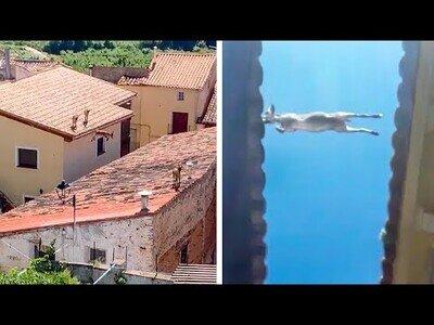 Unas cabras hacen parkour por los tejados de un pueblo en Zaragoza