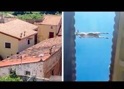 Enlace a Unas cabras hacen parkour por los tejados de un pueblo en Zaragoza