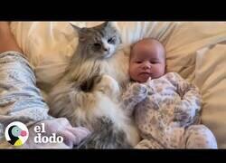 Enlace a Así es el proceso de un gato y un bebé hasta convertirse en inseparables