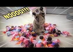 Enlace a ¿Cómo reaccionan los gatos ante 100 ratones de juguete?