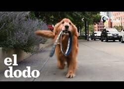 Enlace a Los perros más inteligentes e independientes que verás hoy