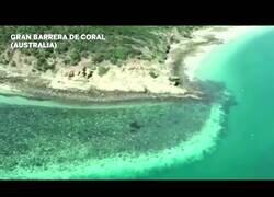 Enlace a La preocupnate decoloración de la barrera coral australiana