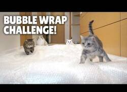 Enlace a Así disfrutan los gatos del plástico de burbujas
