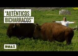 Enlace a Wild Frank visita una isla de bisontes americanos
