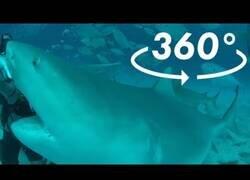 Enlace a Buceando con tiburones en 360º