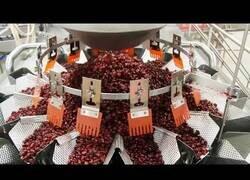 Enlace a Máquinas de envasado y procesamiento de alimentos