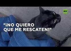 Enlace a El gato atrapado que no quería ser rescatado