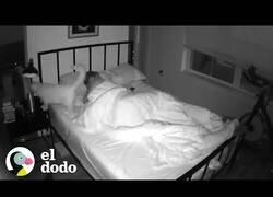 Enlace a Un hombre se graba durante la noche para ver lo que le hace su gato mientras duerme
