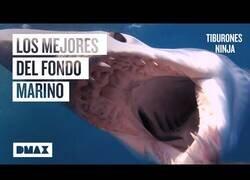 Enlace a Los 6 tiburones más feroces del océano