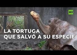 Enlace a Diego, la tortuga que salvó a su especie, regresa a su hogar