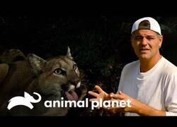 Enlace a Wild Frank visita un poblado donde conviven con la presencia de pumas