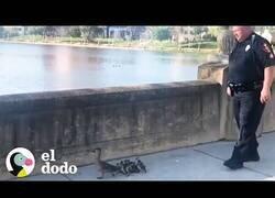 Enlace a La Policía escolta a una familia de patos hasta llegar a su hogar