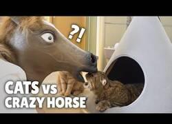 Enlace a Gatos reaccionan ante la presencia de un caballo
