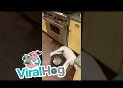 Enlace a Un Roomba apura todas las esquinas que la silueta del perro le permite