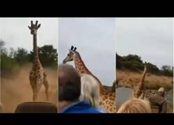 Enlace a Jirafa persigue un vehículo con turistas al estilo Jurassic Park