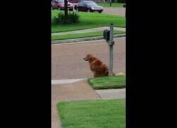 Enlace a Un perro espera a que el servicio de mensajería le entregue el correo