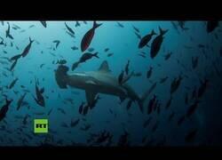 Enlace a Aparece un tiburón cerca de una playa en Croacia