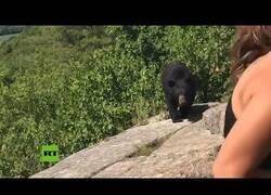 Enlace a La tranquilidad con la que debes reaccionar si te encuentras con un oso