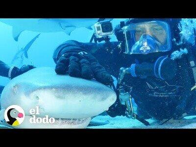 El hombre que logró hacerse amigo de un tiburón