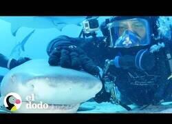 Enlace a El hombre que logró hacerse amigo de un tiburón