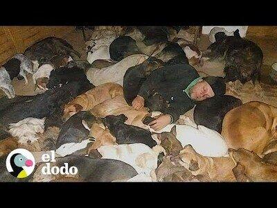 Este hombre duerme con 600 perros a -20Cº