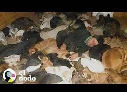 Enlace a Este hombre duerme con 600 perros a -20Cº