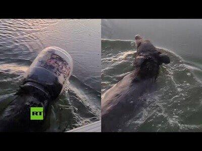 Ayudan a un oso que nadaba por un lago con un contenedor de plástico en la cabeza