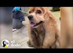 Enlace a La nueva vida de este perro que perdió 3 kilos de pelo