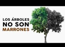 Enlace a Los árboles no son marrones