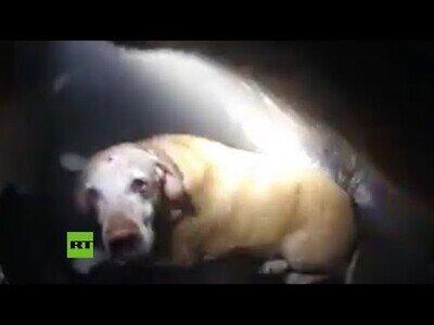 Un policia rescata a un perro de una casa en llamas