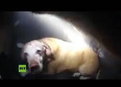 Enlace a Un policia rescata a un perro de una casa en llamas