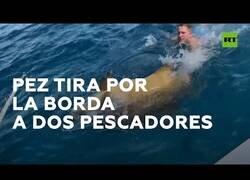 Enlace a Un pez gigante tira por la borda a dos pescadores al intentarlo pescar