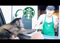 Enlace a Un mono recoge su pedido del Starbucks