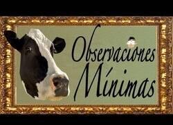 Enlace a Observando mínimamente los envases de leche