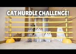 Enlace a ¿Hasta qué altura es capaz de saltar un gato?